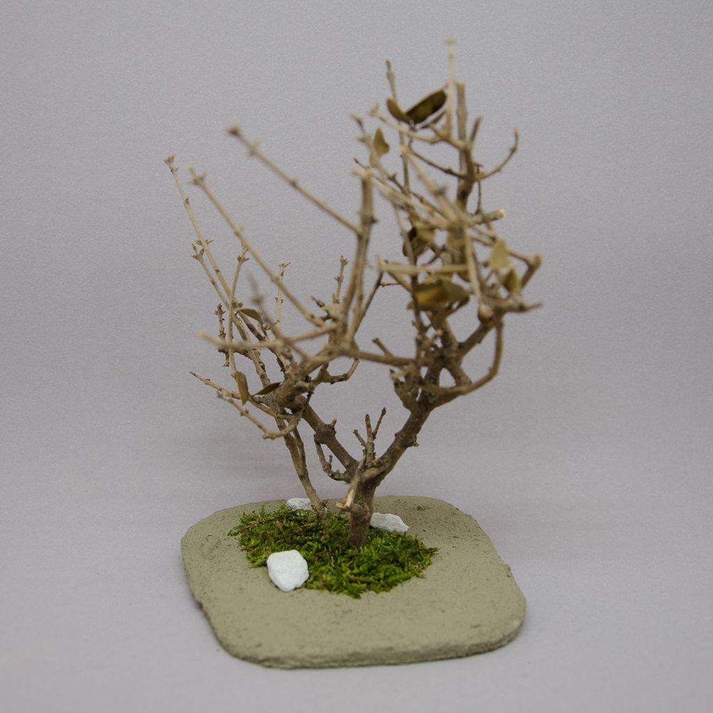 Pinarbaum mit Bodenplatte