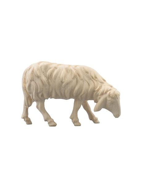 Schaf fressend rechts