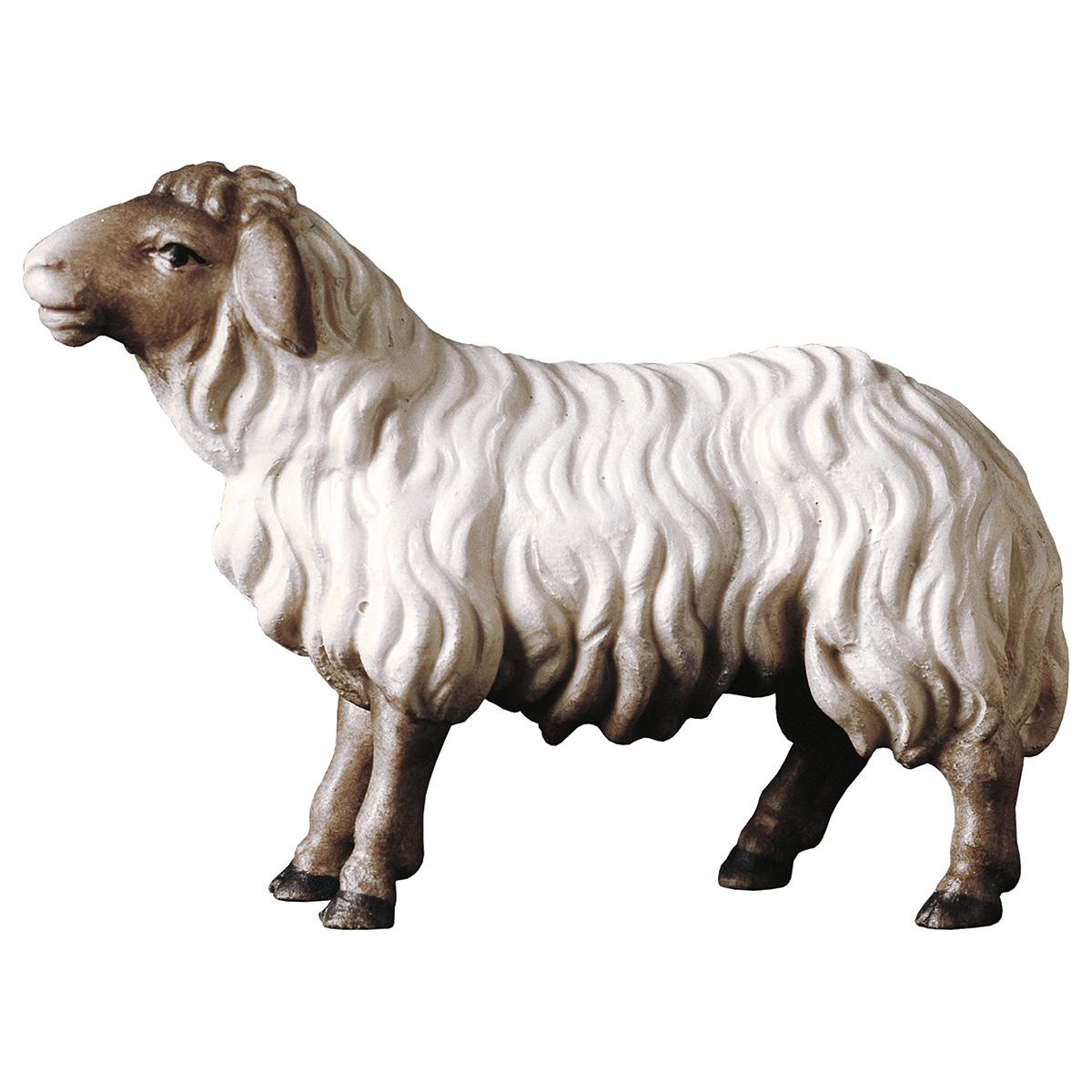 Schaf  geradeaus schauend