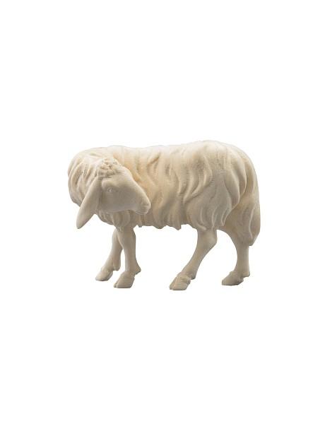 Schaf zurückschauend