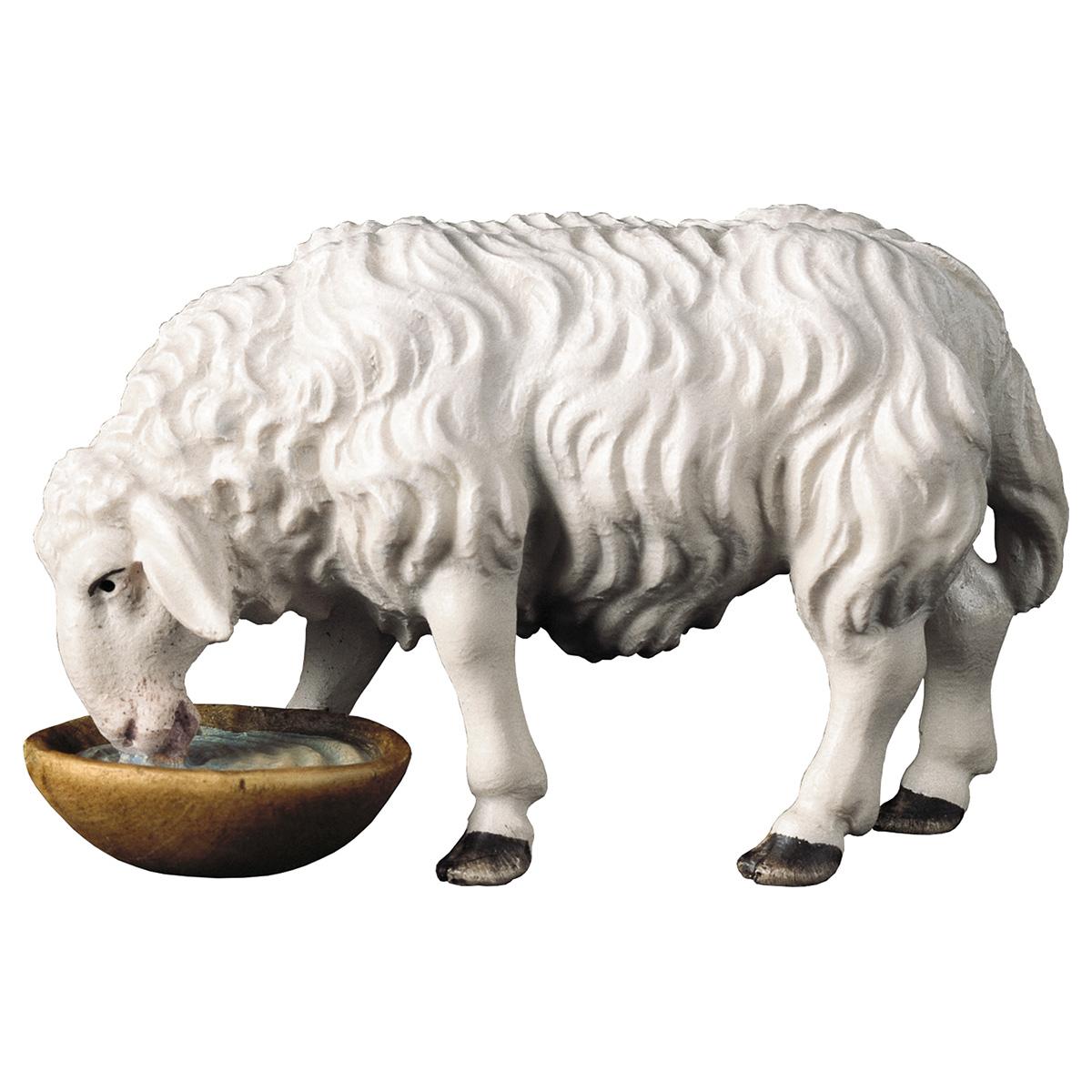 Schaf trinkend