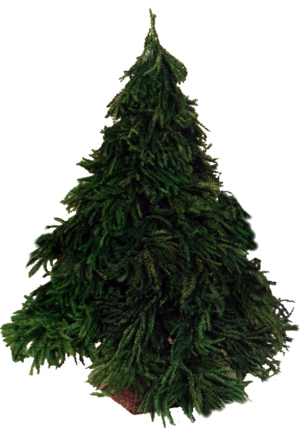 Tannenbaum aus Naturmaterial
