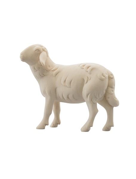 Schaf schauend
