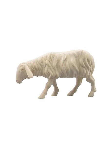 Schaf vorwärts schauend