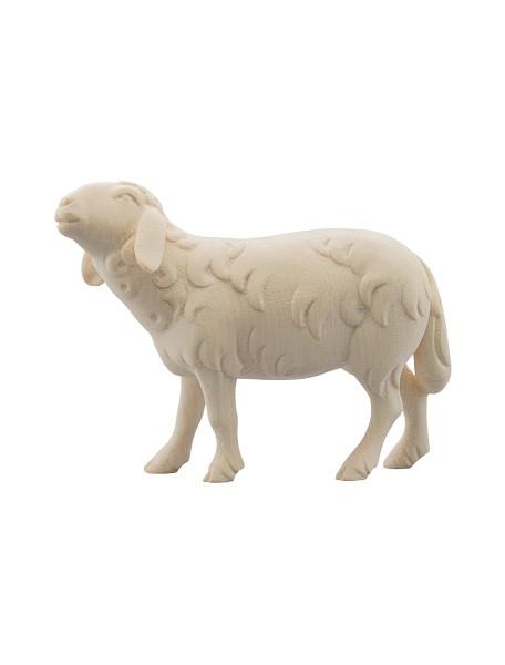 Schaf blökend